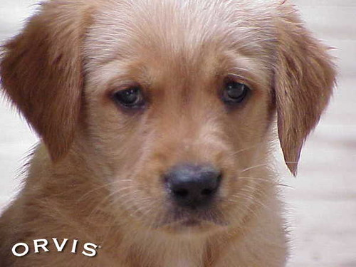 Orvis Cover Dog Contest - Louise Pugh
