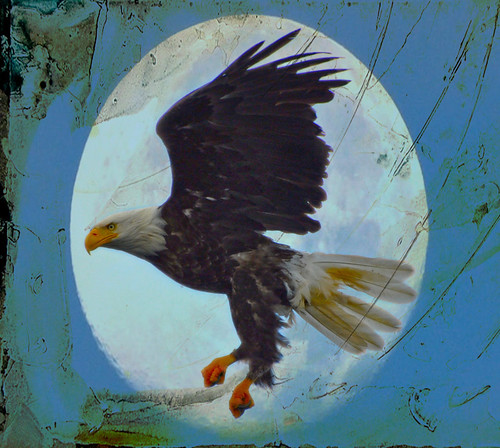 eagle fullmoon djpettitt text darken 2