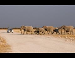 Elephant Crossing I (Stuart-Lee) Tags: africa family wild elephants waterhole namibia herd etosha