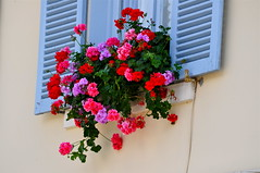 Une fentre  Blangy-le-Chteau (Michele*mp) Tags: flowers france window colors fleurs europe colours couleurs shutters normandie normandy fentre paysdauge calvados volets blangylechteau michelemp