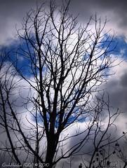 Those smilin' eyes are shining (GoldilocksCG) Tags: blue light summer sky white tree fall nature beautiful smiling clouds forest canon dark outdoors illinois cg eyes bare summertime goldilocks preserve picnik s10 2010 nippersink hf vixia nippersinkforestpreserve canonvixiahfs10 cassandragordon goldilockscg goldilocks777