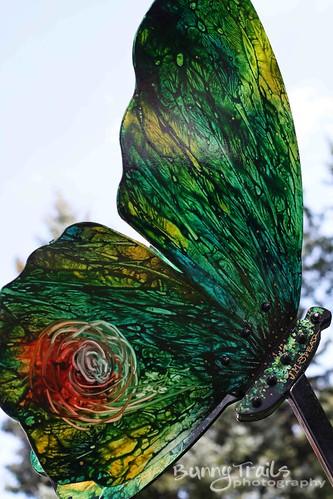 260-butterfly2