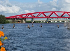 Day 4: red bridge & geese (Abby flat-coat) Tags: bridge red netherlands canon river geese brug rode bikebarge img3732straightjpg