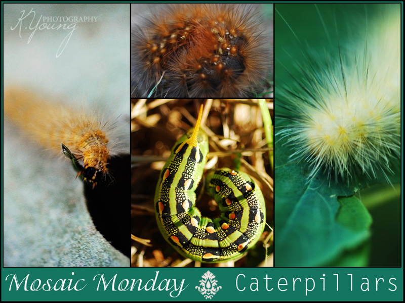 Mosaic Monday: Caterpillars