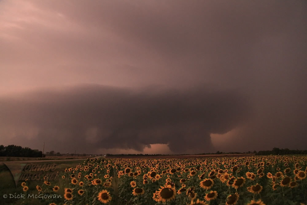 Supercell_Sunflower_1