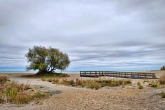 Illinois Beach (Greg Foster Photography) Tags: park county lake chicago tree beach clouds illinois midwest state michigan overcast ill boardwalk zion northern superfund cullerton illinoisbeachstatepark