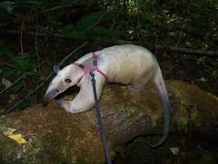 On a fallen tree