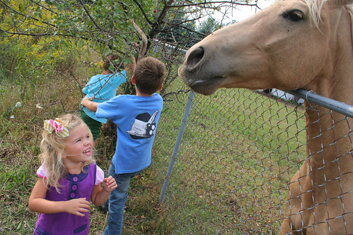 feeding the neighbor's horse