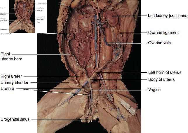 The Worlds Best Photos by BCCAnatomy Flickr Hive Mind – Cat Dissection Worksheet