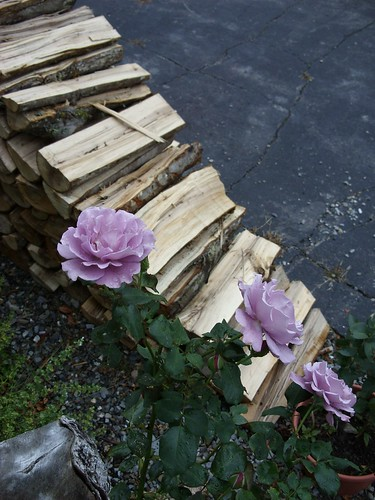 rose_and_wood