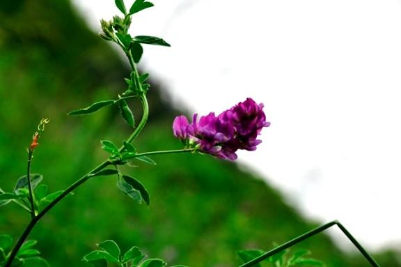 Jiuzhaigou flower9
