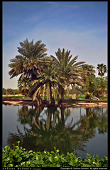 Reflection of palm ! -   ! (Safwan Babtain -  ) Tags: reflection palm    yanpu