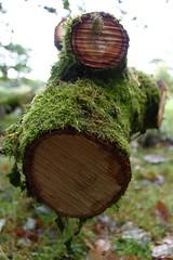 IMG_0738a (Noel Moloney) Tags: tree cork trunk fota lcfe