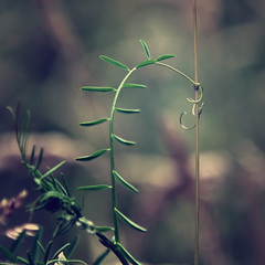 Turnabout. (next_in_line) Tags: plant nature dark pumpkin climb stem bokeh grow knot string grip