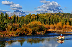 A Golden Morning in Jackson Hole (Jeff Clow) Tags: horses man mountains male river landscape riding western wyoming equine grandtetonnationalpark jacksonholewyoming buffalofork