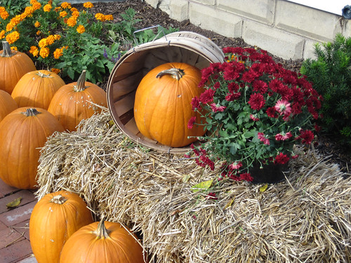 Pumpkins, Haystacks and Mums