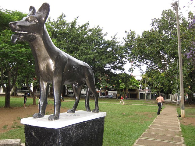 """Teddy"" stands watch over Parque de los Perros"