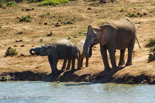 RYALE_SA_National_Park_Addo_69