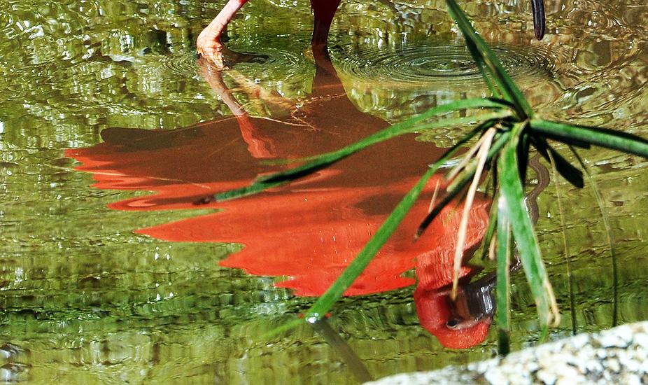 soteropoli.com fotografia fotos de salvador bahia brasil brazil 2010 zoo zoologico by tuniso (20)