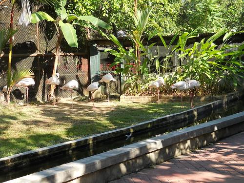 Penang Bird Park 16-09-2010