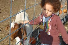 My Pet Goat