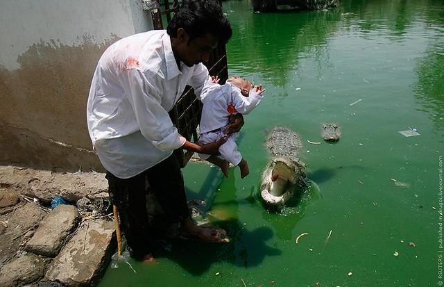 Alligator + baby