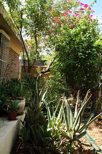 My garden 0076 September 24, 2010