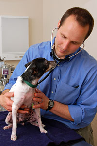 Dr. Mike Dix, Medical Director at Best Friends Animal Society