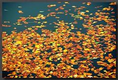 Autumn; ősz (Robert Rakonczai) Tags: commute sensational soe visualart pictureperfect daly blueribbonwinner supershot bej fineartphotos abigfave flickraward diamondclassphotographer flickrdiamond theunforgettablepictures donauradwanderweg overtheexcellence justpentax theperfectphotographer goldstaraward wonderfulworldofflowers rubyphotographer top20travelpix flickrunitedaward