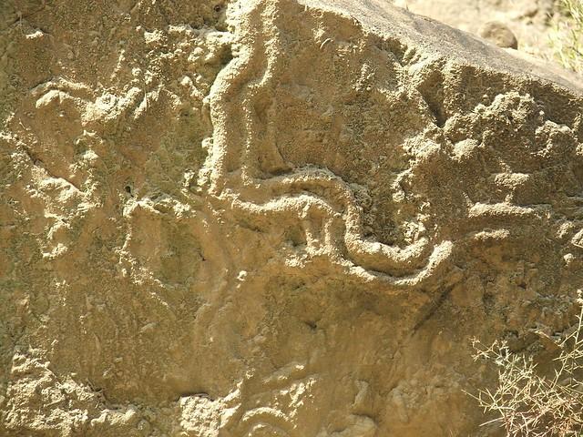 Scolicia trace fossil
