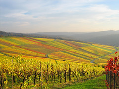Vineyards Quilt of Nature in Autumn Colours, Germany (Batikart ... handicapped ... sorry for no comments) Tags: road street autumn shadow red sky orange cloud sun mountain plant flower tree green rot fall nature field leaves yellow forest canon germany way landscape geotagged deutschland leaf vineyard vines europa europe pattern colours seasons quilt wine earth path hill herbst natur stripe sunny foliage gelb vineyards greenery colourful geology grn patchwork landschaft bltter grape indiansummer wein 2010 weinberg streifen badenwrttemberg swabian beutelsbach canonpowershota610 herbstfrbung 100faves 50faves 200faves 300faves regionstuttgart superaplus 400faves batikart remsmurrkreis