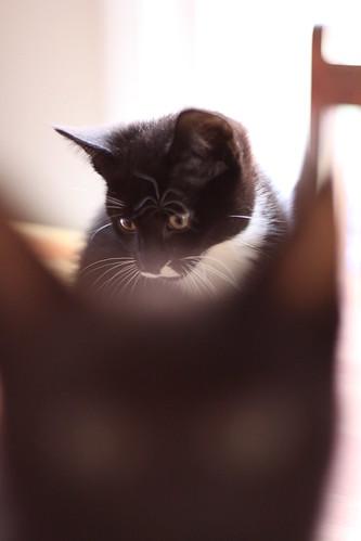 A portrait of a kitten (4)