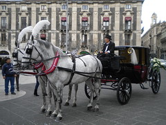 Cavalli per matrimoni - Horses for marriages (amipreside) Tags: horses carrozza cavalli matrimonio cerimonia