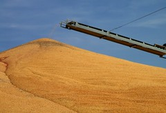 Corn Harvest (ConanTheLibrarian) Tags: corn nebraska grain harvest pile kearney zeamays buffalocounty groundstorage