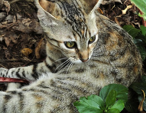 Nina no quintal