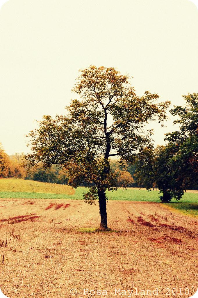 Fall Walk 5.1 bis