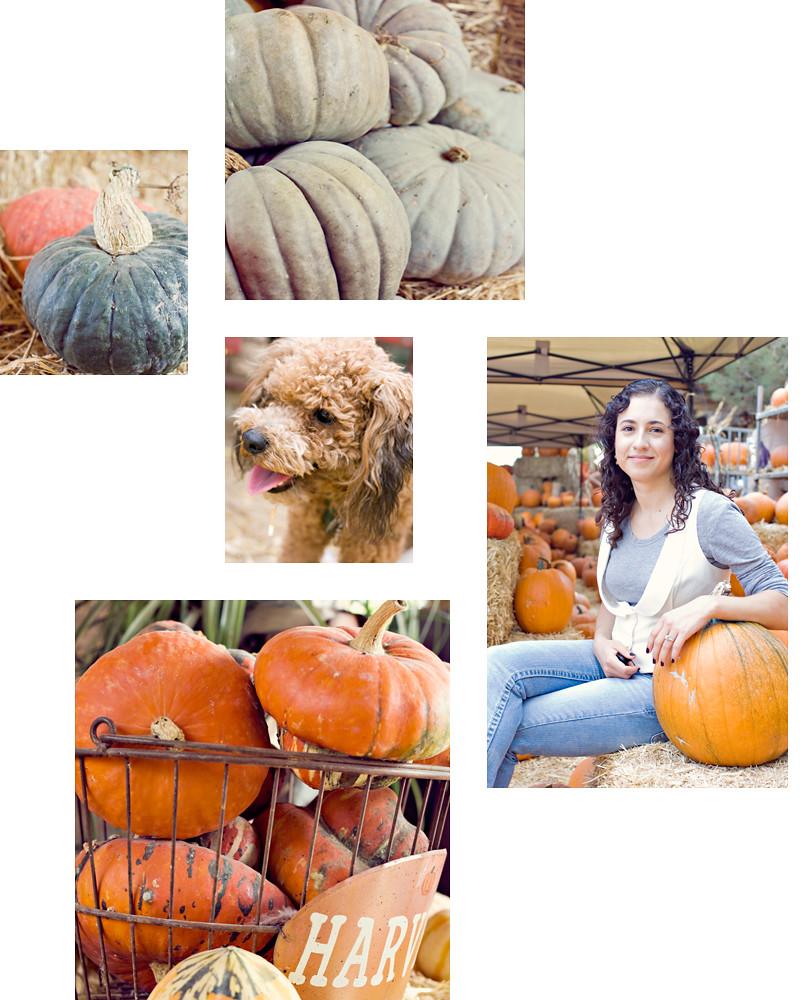 Pumpkin-Festival-I