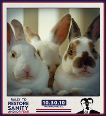 Rally to Restore Disapproval (Carly & Art) Tags: cute bunnies rabbits fearthis dissapproval sanityandorfear