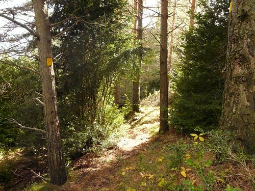 Bosc Berguedà