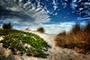 Green Patch (...-Wink-...) Tags: sky grass clouds dunes picasa iceplant thegimp hdr photomatix sigma18200 nikond80 oxnardcalifornia topazadjust platinumpeaceaward tripleniceshot