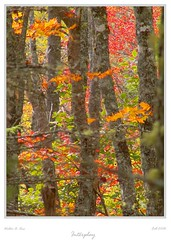 Interplay (Walter A. Aue) Tags: autumn trees leaves novascotia herbstblaetter