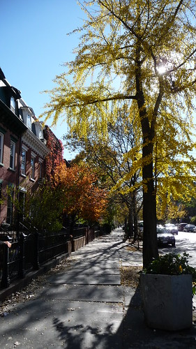 Fall in Clinton Hill