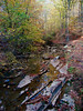 the forest floor (bdaryle) Tags: autumn fall nature leaves creek forest woods sony brandondaryle bdaryle imagesbybrandon