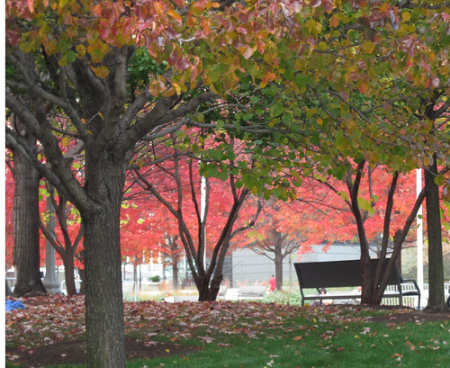 Millennium Park, Chicago. Fall 2010-20