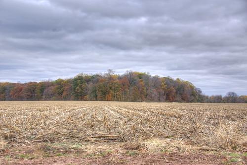 Autumnitude