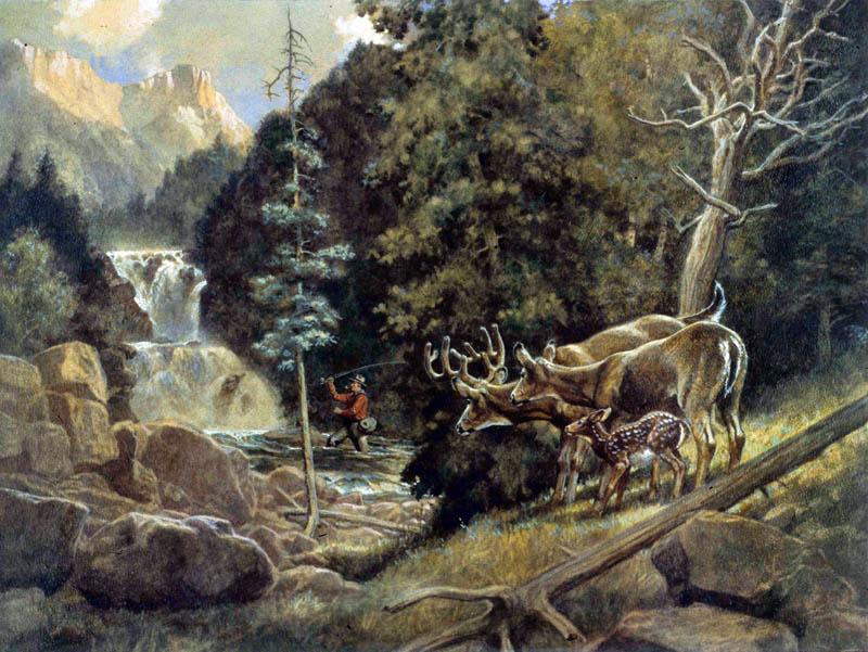 5-3 deer