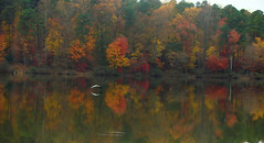 stillness (bdaryle) Tags: autumn fall heron nature water colors reflections sony brandondaryle bdaryle imagesbybrandon