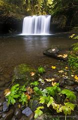 upper butte creek falls, 11-05-10 (Dillon Gallagher) Tags: nature oregon fallcolors waterfalls buttecreek upperbuttecreekfalls
