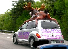 World's Fastest Moose (Bob Gundersen) Tags: berlin cars strange sign interesting nikon traffic image picture newengland newhampshire nh moose huge scenes gundersen northernnewhampshire greatnorthwoods bobgundersen