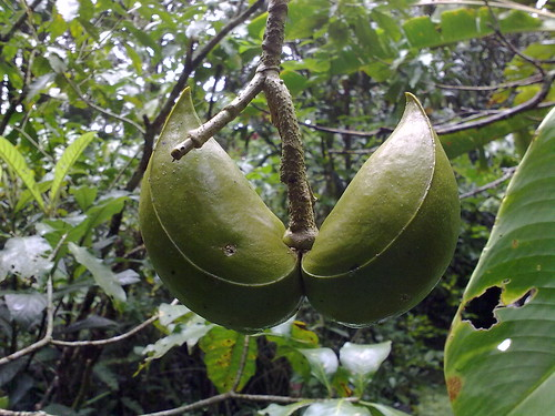 Fruto extraño
